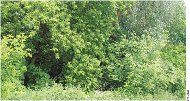 Lasy w Konstancinie